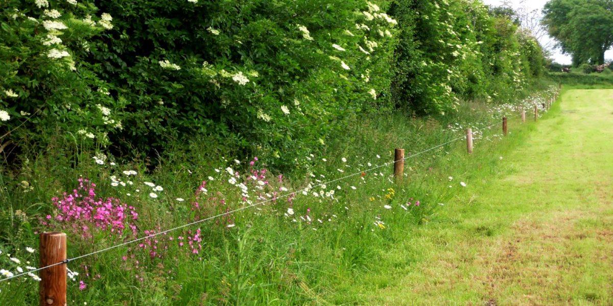 Biodiverse hedgerow
